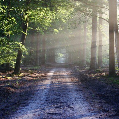 lichtdurchfluteter Waldweg